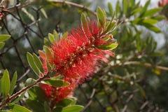 Bei piccoli fiori che rappresentano la bellezza della presa del natuGrip della vista di vista fuori, senza carattere e del giorno Fotografia Stock