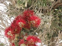 Bei piccoli fiori nei colori sensazionali Fotografia Stock