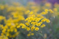 Bei piccoli fiori selvaggi fotografia stock