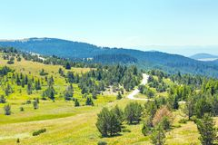 Bei pini nel paesaggio delle alte montagne Fotografie Stock
