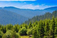Bei pini nel paesaggio delle alte montagne Fotografia Stock