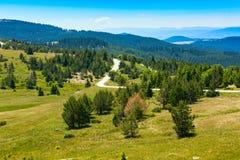 Bei pini nel paesaggio delle alte montagne Fotografie Stock Libere da Diritti