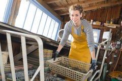 Bei prodotti biondi dei pacchetti dell'ostricoltore Immagini Stock Libere da Diritti