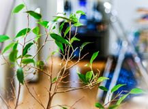 Bei rami di alberi con alcune foglie immagini stock