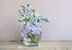 Bei ramoscelli della ciliegia in piccolo vaso di vetro decorativo Fotografia Stock Libera da Diritti