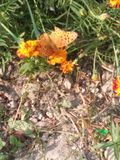 Bei regali dei fiori e delle foglie del dio Immagini Stock Libere da Diritti