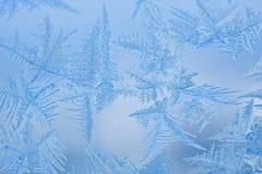 Bei reticoli su un vetro congelato Fotografie Stock