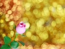 Bei rosa di rosa e fondo del bokeh fotografia stock libera da diritti