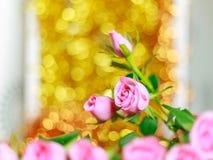 Bei rose e fondo rosa del bokeh fotografia stock libera da diritti