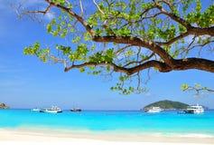 Bei spiaggia e ramo dall'albero sull'isola di Similan, TAILANDIA Fotografia Stock