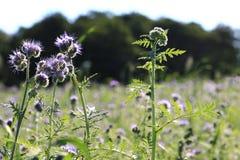 Bei summerflowers Immagine Stock