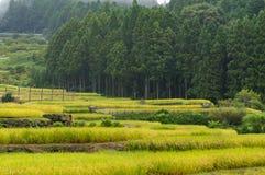 Bei terrazzi del riso con la foresta sui precedenti Fotografia Stock