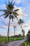 Bei terrazzi del riso e del villaggio in Ubud, isola di Bali, Indone Immagini Stock