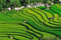 Bei terrazzi del riso in Sapa, Vietnam Fotografie Stock