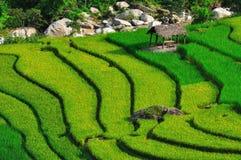 Bei terrazzi del riso in Sapa, Vietnam Immagine Stock Libera da Diritti
