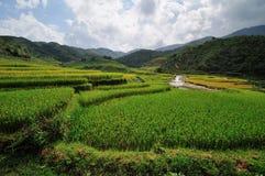 Bei terrazzi del riso in Sapa, Vietnam Immagini Stock Libere da Diritti