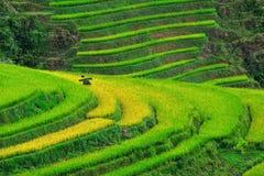 Bei terrazzi del riso in Sapa, Vietnam Fotografia Stock Libera da Diritti