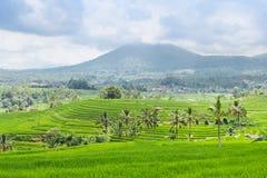 Bei terrazzi e montagne del riso su Bali Immagini Stock