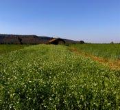 Bei terreno coltivabile e paesaggio, samarda, Bhopal, India fotografie stock libere da diritti