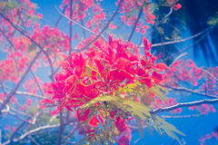 Bei toni astratti floreali di buio di stile Fotografie Stock