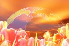 Bei tulipani illustrazione vettoriale