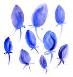 Bei tulipani blu su un fondo bianco watercolor Fotografia Stock Libera da Diritti