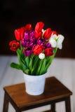 Bei tulipani del colorfull nel secchio Fotografia Stock