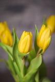 Bei tulipani di giallo della molla in un vaso Immagini Stock