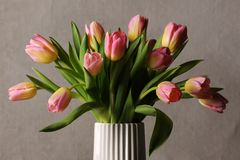 Bei tulipani rosa Fotografie Stock