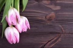 Bei tulipani rosa su fondo di legno Copi lo spazio Fotografia Stock