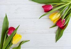 Bei tulipani su un fondo bianco Festa di concezione, Marc Fotografia Stock