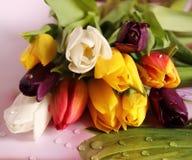 Bei tulipani su un fondo di legno scuro Piovuto appena sopra immagine stock libera da diritti