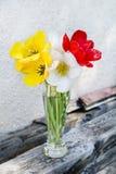 Bei tulipani in un vaso su un fondo di legno Fotografia Stock Libera da Diritti