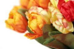 Bei tulipani variopinti - isolati su priorità bassa bianca Immagine Stock Libera da Diritti