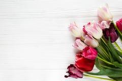 Bei tulipani variopinti, sulla tavola di legno bianca Biglietti di S. Valentino, fondo della molla derisione floreale su con copy immagine stock libera da diritti