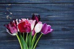 Bei tulipani viola rosa variopinti sulla tavola di legno grigia Biglietti di S. Valentino, fondo della molla derisione floreale s fotografia stock libera da diritti