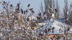 Bei uccelli che si siedono sul ramo di albero coperto da neve Fotografia Stock
