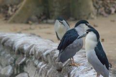 Bei uccelli che si siedono in una fila Fotografie Stock Libere da Diritti