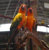 Bei uccelli dell'ara e del pappagallo del primo piano nei parchi pubblici immagini stock libere da diritti