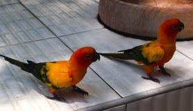 Bei uccelli dell'ara e del pappagallo del primo piano nei parchi pubblici fotografie stock