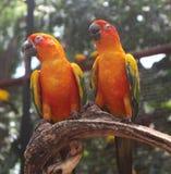 Bei uccelli dell'ara e del pappagallo del primo piano nei parchi pubblici immagini stock