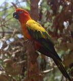 Bei uccelli dell'ara e del pappagallo del primo piano nei parchi pubblici immagine stock libera da diritti