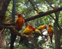 Bei uccelli dell'ara e del pappagallo del primo piano nei parchi pubblici fotografia stock