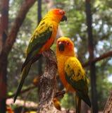 Bei uccelli dell'ara e del pappagallo del primo piano nei parchi pubblici immagine stock