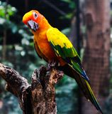 Bei uccelli dell'ara e del pappagallo del primo piano nei parchi pubblici fotografia stock libera da diritti