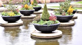 Bei vasi da fiori Fotografie Stock