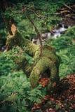 Bei vecchi alberi con muschio in legno gambo dell'albero con poca p Fotografia Stock