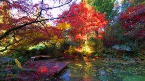 Bei Washington Autumn Nature Scenery - Washington Park Arboretum fotografia stock libera da diritti