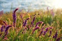 Bei wildflowers Fotografia Stock Libera da Diritti