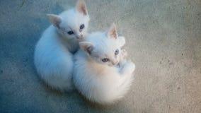 Beide kleine bastaarde katten Royalty-vrije Stock Afbeeldingen